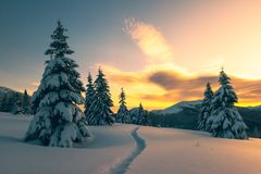 Δραματική χειμερινή σκηνή με τα χιονώδη δέντρα Στοκ Εικόνες