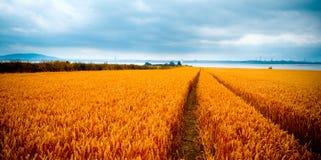 δραματική όψη wheatfields στοκ εικόνα