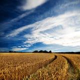 δραματική όψη wheatfields στοκ φωτογραφία