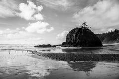 Δραματικό γραπτό seascape με το σχηματισμό βράχου και τα δέντρα που απεικονίστηκαν σε μια υγρή, αμμώδη παραλία στοκ εικόνα με δικαίωμα ελεύθερης χρήσης