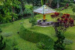 Δροσερά και όμορφα πορτρέτα κήπων στοκ εικόνα