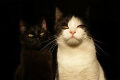 Δροσερές γάτες Στοκ Εικόνες