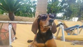 Δροσερή συνεδρίαση σκυλιών σε ένα μόνιππο longue ενάντια σε μια λίμνη που χαλαρώνει φορώντας τα γυαλιά ηλίου Μια όμορφη χαριτωμέν απόθεμα βίντεο
