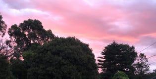 Δροσερός θερινός ουρανός με τα ρόδινα σύννεφα στοκ εικόνες