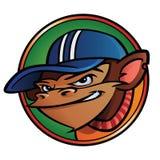 δροσερός πίθηκος ΚΑΠ Στοκ φωτογραφίες με δικαίωμα ελεύθερης χρήσης