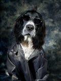 Δροσερό σκυλί Στοκ φωτογραφία με δικαίωμα ελεύθερης χρήσης