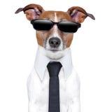 Δροσερό σκυλάκι Στοκ φωτογραφία με δικαίωμα ελεύθερης χρήσης