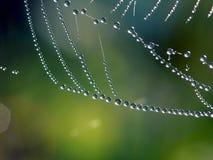 δροσιά ιστών αράχνης Στοκ Εικόνες