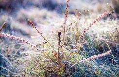 Δροσιά και παγετός πρωινού Στοκ φωτογραφία με δικαίωμα ελεύθερης χρήσης