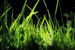 Δροσιά νύχτας στη χλόη στοκ εικόνες
