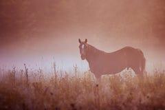 Δροσιά ομίχλης πρωινού λιβαδιού αλόγων στοκ εικόνες