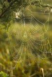 Δροσιά πρωινού σε ένα spiderweb Στοκ φωτογραφία με δικαίωμα ελεύθερης χρήσης