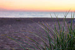 Δροσιά πρωινού στη χλόη αμμόλοφων Στοκ Φωτογραφίες