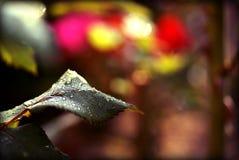 Δροσιά πρωινού στο φύλλο με το καταπληκτικό ζωηρόχρωμο θολωμένο υπόβαθρο Στοκ Εικόνες