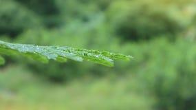 Δροσιά στα φύλλα στο δασικό υπόβαθρο θαμπάδων Στοκ φωτογραφία με δικαίωμα ελεύθερης χρήσης