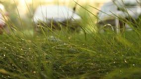 Δροσιά στην πράσινη χλόη την άνοιξη σε μια θολωμένη κινηματογράφηση σε πρώτο πλάνο υποβάθρου φύση στη μακροεντολή φιλμ μικρού μήκους