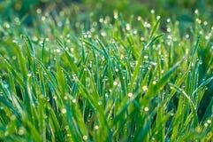 Δροσιά στην πράσινη χλόη Στοκ Φωτογραφία