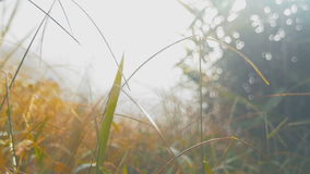 Δροσιά στην πράσινη χλόη φιλμ μικρού μήκους