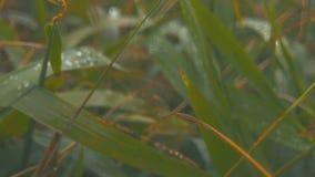 Δροσιά στην πράσινη χλόη απόθεμα βίντεο