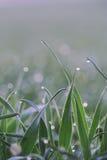 Δροσιά στη χλόη σε ένα ηλιόλουστο πρωί ανοίξεων Στοκ Εικόνες