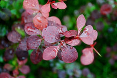 Δροσιά στο λουλούδι Στοκ Εικόνα