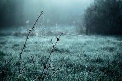 Δροσιά στο spiderweb Στοκ εικόνες με δικαίωμα ελεύθερης χρήσης