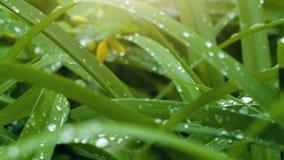Δροσιά φύλλα απόθεμα βίντεο