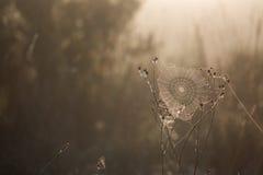 Δροσοσκέπαστα ξημερώματα ιστών αράχνης το φθινόπωρο αναδρομικά φωτισμένο Στοκ εικόνα με δικαίωμα ελεύθερης χρήσης