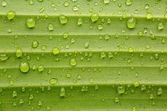 Δροσοσταλίδες σε ένα φύλλο μπανανών Στοκ Εικόνες