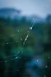 Δροσοσταλίδα, spiderweb Στοκ φωτογραφία με δικαίωμα ελεύθερης χρήσης