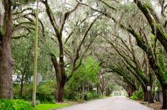 Δρόμος δέντρων - Φλώριδα - ΗΠΑ Στοκ Φωτογραφία