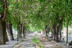 Δρόμος δέντρων Στοκ φωτογραφία με δικαίωμα ελεύθερης χρήσης