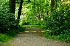 Δρόμος ή πορεία αμμοχάλικου πάρκων που τρέχει μέσω των πράσινων δασικών δέντρων και του π Στοκ φωτογραφίες με δικαίωμα ελεύθερης χρήσης
