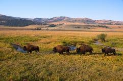 Δρόμος αβαείων σε Yellowstone Στοκ φωτογραφίες με δικαίωμα ελεύθερης χρήσης