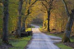 Δρόμος αμμοχάλικου που τρέχει μέσω του δάσους άνοιξη στοκ εικόνα