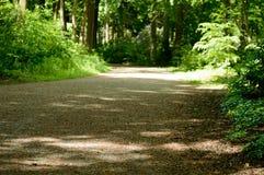 Δρόμος αμμοχάλικου πάρκων με τα φρέσκες πράσινες χρωματισμένες δασικά δέντρα και τις εγκαταστάσεις Στοκ φωτογραφία με δικαίωμα ελεύθερης χρήσης