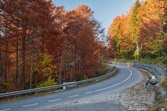 Δρόμος ασφάλτου μέσω του δονούμενου δάσους Στοκ εικόνα με δικαίωμα ελεύθερης χρήσης