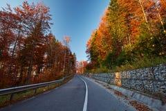Δρόμος ασφάλτου μέσω του δονούμενου δάσους Στοκ φωτογραφία με δικαίωμα ελεύθερης χρήσης