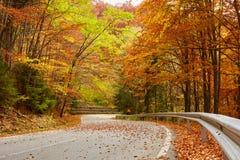Δρόμος ασφάλτου μέσω του δονούμενου δάσους Στοκ εικόνες με δικαίωμα ελεύθερης χρήσης