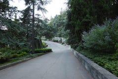 Δρόμος ασφάλτου με τα όμορφους διακοσμητικούς δέντρα και τους Μπους στις πλευρές που κατεβαίνουν στην πράσινη ζώνη πάρκων Στοκ φωτογραφία με δικαίωμα ελεύθερης χρήσης