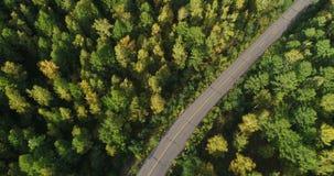 Δρόμος ασφάλτου στο δάσος φιλμ μικρού μήκους