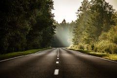 Δρόμος ασφάλτου στο δάσος στοκ φωτογραφία με δικαίωμα ελεύθερης χρήσης