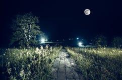 Δρόμος βουνών μέσω του δάσους σε μια νύχτα πανσελήνων Φυσικό τοπίο νύχτας του σκούρο μπλε ουρανού με το φεγγάρι Στοκ Εικόνες