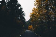 Δρόμος βουνών στο δάσος στοκ εικόνες