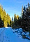 Δρόμος βουνών χιονιού σε ένα δάσος κοντά στο μικρό ποταμό Στοκ Εικόνες