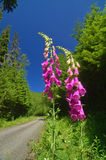 δρόμος βουνών Στοκ φωτογραφίες με δικαίωμα ελεύθερης χρήσης