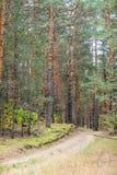 Δρόμος επαρχίας στο δάσος πεύκων στο φθινόπωρο στοκ φωτογραφία με δικαίωμα ελεύθερης χρήσης