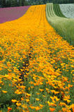 δρόμος κίτρινος Στοκ Φωτογραφίες