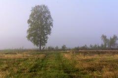 Δρόμος και δέντρο στην ομίχλη Στοκ εικόνα με δικαίωμα ελεύθερης χρήσης