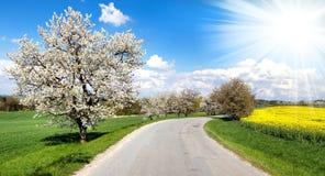 Δρόμος και αλέα των ανθίζοντας κεράσι-δέντρων Στοκ φωτογραφίες με δικαίωμα ελεύθερης χρήσης